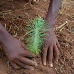 ökologisch nachhaltig werbeartikel